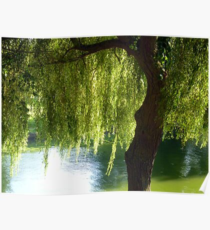 Willow tree by the canal Poster