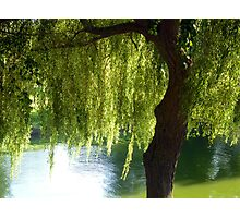 Willow tree by the canal Photographic Print