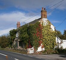 Ivy Cottage by brucemlong