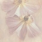 """""""Delicate Poppies IPhone Case..."""" by Rosehaven"""
