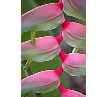 Exotic Charmer Photographic Print