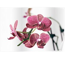 Assorted orchid Poster