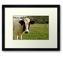 Young Cow Framed Print