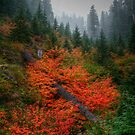 A Sea Of Red by Charles & Patricia   Harkins ~ Picture Oregon