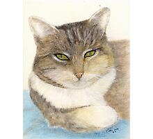 Calico Tabby Cat Feline Animals Cathy Peek Pets Photographic Print