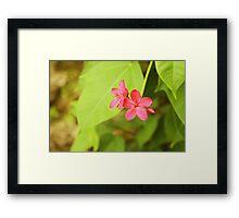 Flower in the hotel garden Framed Print