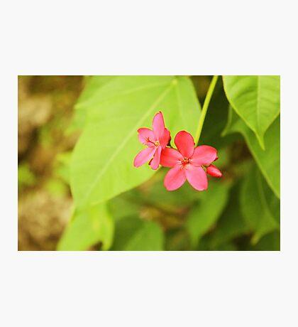 Flower in the hotel garden Photographic Print