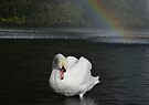Swan and the rainbow by Peter Wiggerman