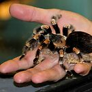 Tarantula Yikes by Larry Trupp