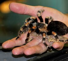 Tarantula Yikes by Larry Trupp