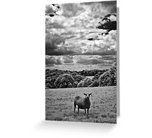 Infrared - Sheep in field Greeting Card