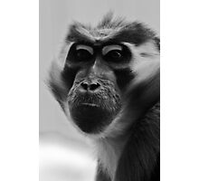 Tired looking old monkey Photographic Print