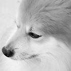 Maverick Little Fox 1 by ©Dawne M. Dunton