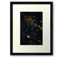 Honeydew, great southern wildflower Framed Print