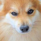 Maverick Little Fox 5 by ©Dawne M. Dunton