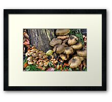 fungi in HDR Framed Print