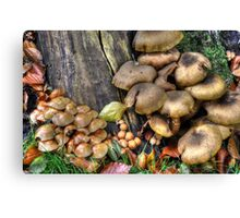 fungi in HDR Canvas Print