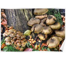 fungi in HDR Poster