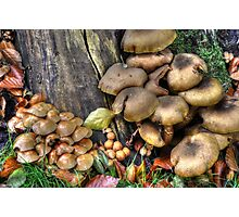 fungi in HDR Photographic Print