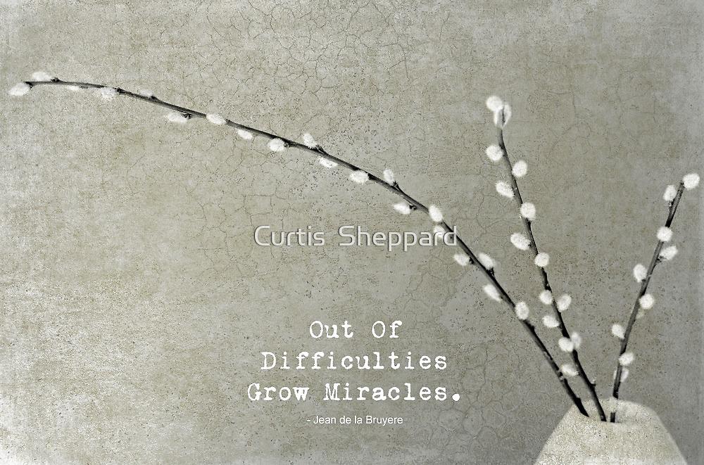 Meditation by Curtis  Sheppard