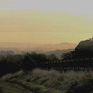Misty Morning by Caroline Anderson