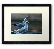 Seagulls Framed Print