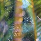 Spiders Web 1 by Cheryl Styles