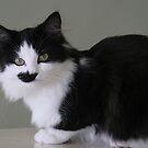 Half a Mustach! by Rose Landry