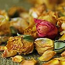Cinderella's Rose by Lynn Gedeon
