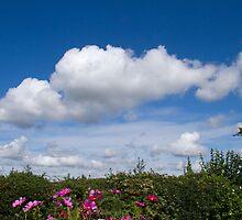 Summer Sky by Sue Robinson