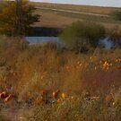 Pumpkin Pasture by Jordan Selha