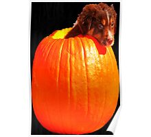 Puppy in a Pumpkin! Poster