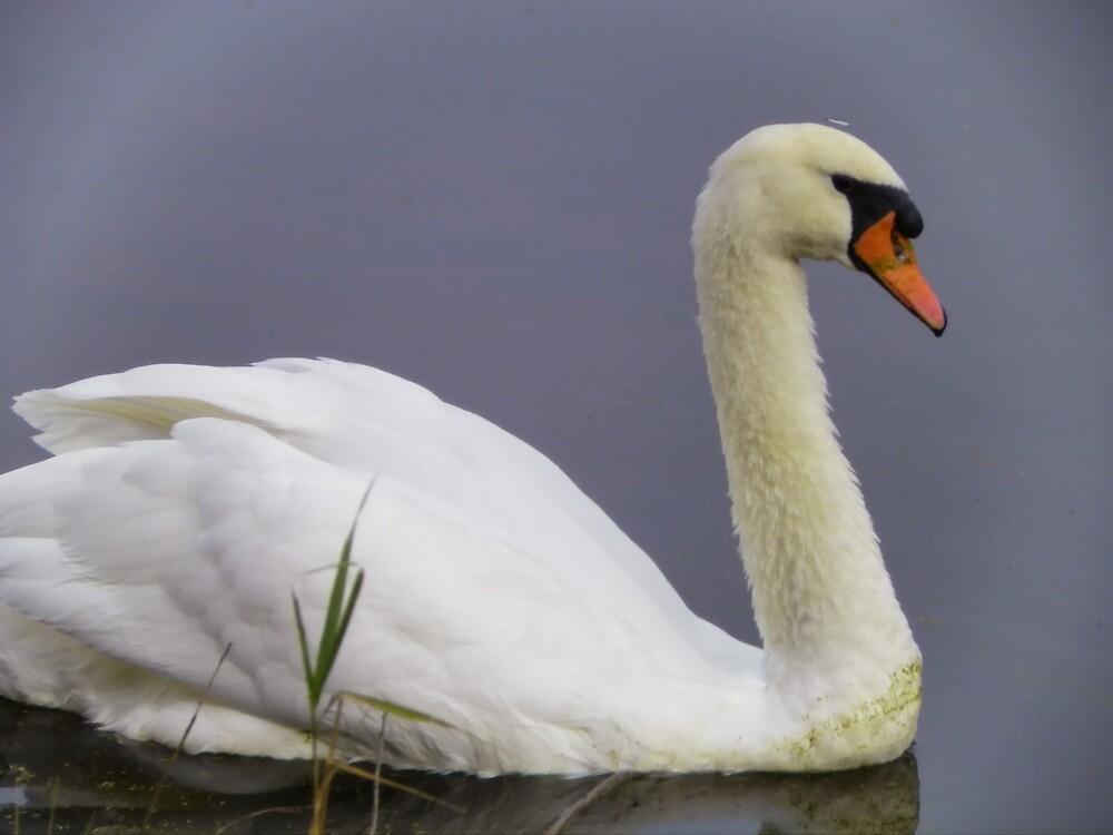 White Calm by Pamela Phelps