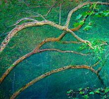 mystical forest by terezadelpilar~ art & architecture