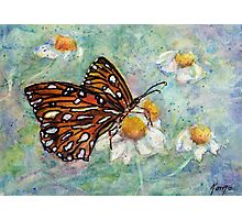 Daisies Delight - Butterfly Photographic Print