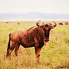 You Had a Question? ( Wildebeest Sage ) by emiliewho