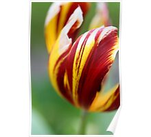 Tulip with bokeh Poster