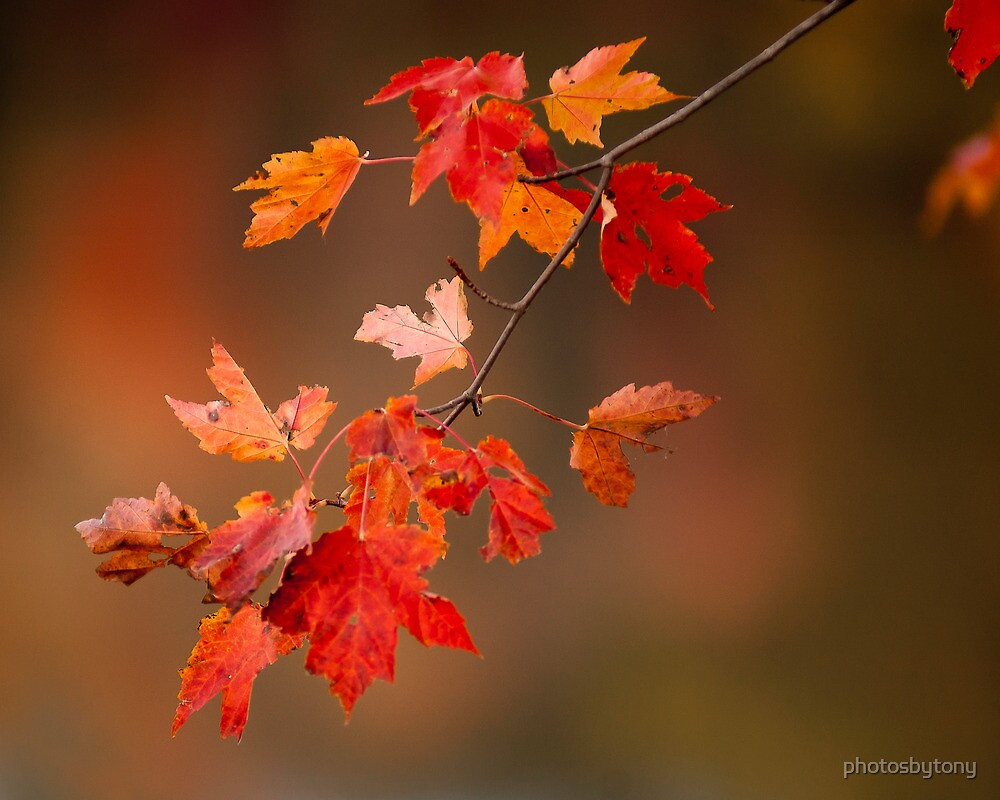 Fall Color Splash by photosbytony
