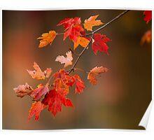 Fall Color Splash Poster