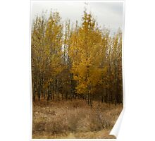 Nose Hill Park Poster