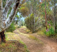 A Country Lane - Kanmantoo, Adelaide Hills, SA by Mark Richards