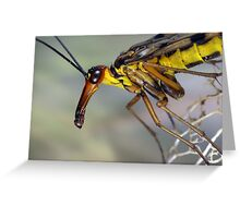 Scorpionfly Greeting Card
