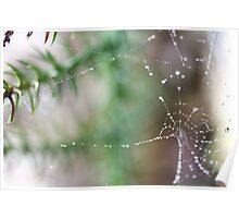 Water Web Poster