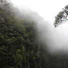 Coomera Falls by MiloAddict