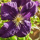 purple flower by 60nine
