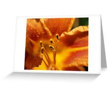 Orange flower petals macro Greeting Card
