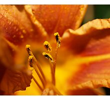 Orange flower petals macro Photographic Print