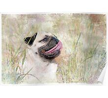 Pug Happiness Poster