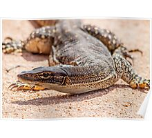 Monitor Lizard Poster