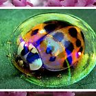 Bubble Beetle by Mark Walton